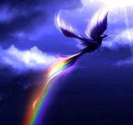 phoenix rainbow